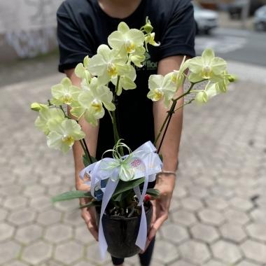 Mini Orquídea na Cerâmica
