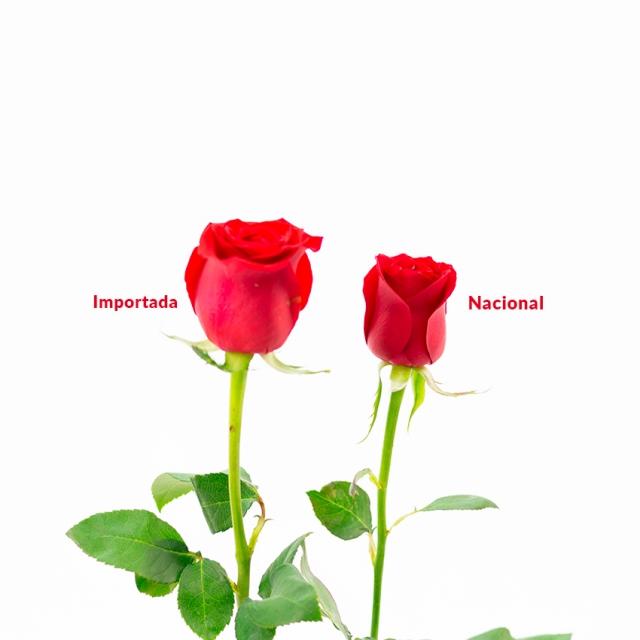 Buquê 24 Rosas Importadas com Alstroeméria