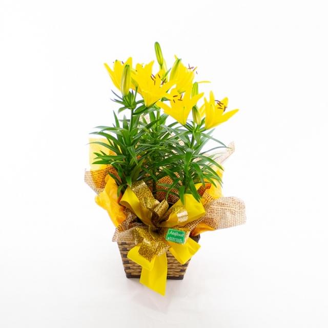 Vaso Lírio Amarelo Grande